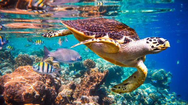 Endangered Animals - Sea turtle