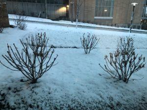 omaha snow 031520