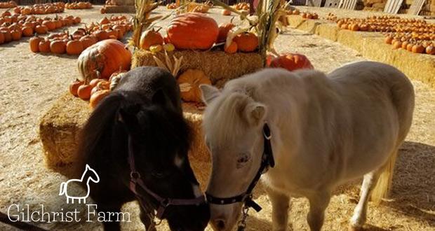 Gilchrist Farm Pumpkin Patch
