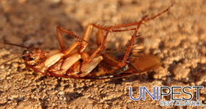 Unipest - Cockroaches